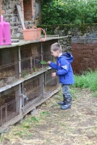 konijntjes voeren